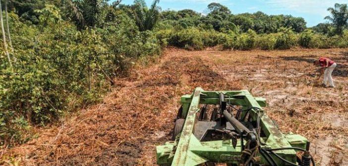 Agricultura no Município de Colares